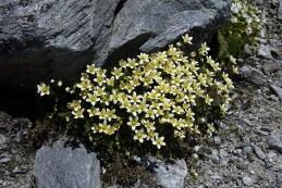 Gorsko cvetje...