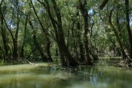 Poplavni gozd