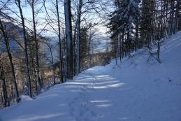 Po gozdni cesti