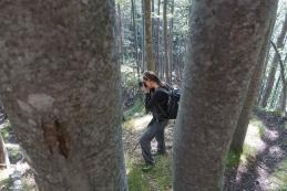Samo po gozdu sva hodila, a lepi motivi so se kar vrstili...