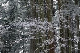 ...v gozdu prelepo...