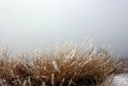 ...mraz in megla in ivje...