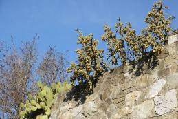 Kaktusi v Ospu