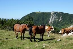 Planina Košutna