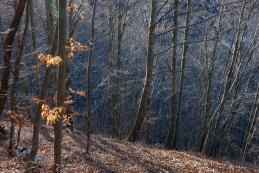 Sonce v gozdu