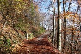 Cesta proti Govejku