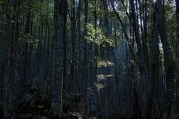 V gozdu
