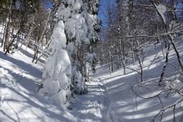 Prava zima