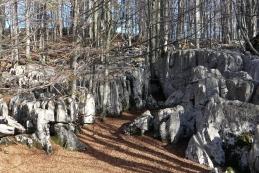 Kamniti gozd