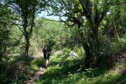 Pot po gozdu