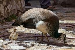 Mama in mladič
