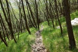 Pot v dolino