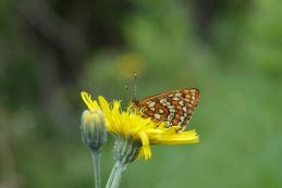 Ob toliko cvetja tudi metulji pridejo na svoj račun... :-)