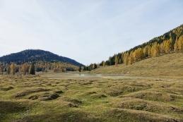 Grbinasti travniki
