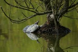Želve