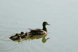 ...za novo rundo plavanja... :-)