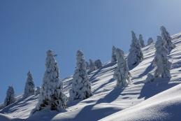 ...in skoraj cel gozd samih lepih...