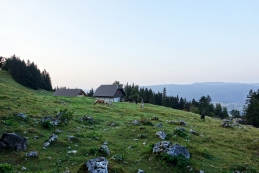 Žirovniška planina