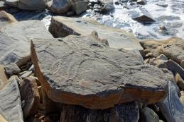 Fosilne sledi