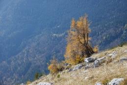 Jesen ob poti...