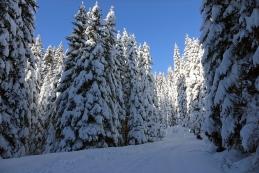 Zimsko vzdušje