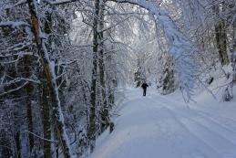 Zimska idila v gozdu