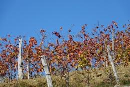 Brda jeseni