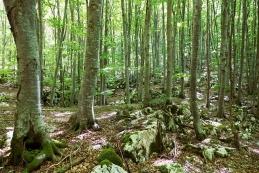 V gozdu...