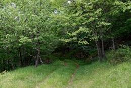 V gozd