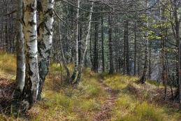 Jesenske trave ob poti