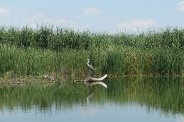 Delta Donave