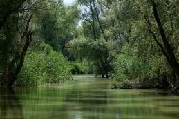 Ozek kanal v delti Donave