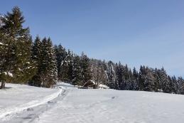 Bistriška planina