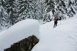 Veliko snega