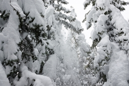 Sneg leti