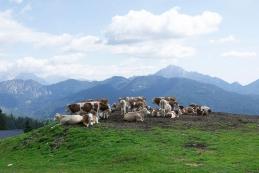 Planina Šija