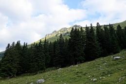 Planina Pungrat