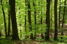 Pomladni gozd