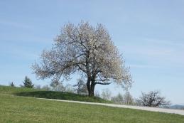 Pomlad pod Jančami...