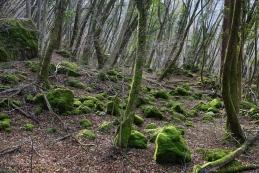 Gozd proti Temljinam