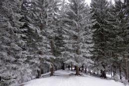 ...gozd enako lep kot zjutraj...