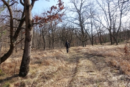Hrastov gozd