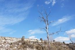 Cesta v Podgorje
