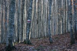 V gostem gozdu