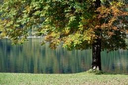 Ob Bohinjskem jezeru