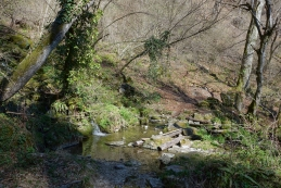 Izvir potoka