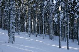 V zimskem gozdu