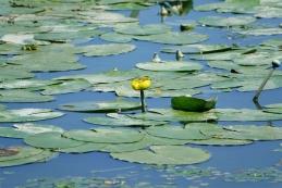 Gajševsko jezero