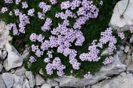 Pirenejski kamnokras