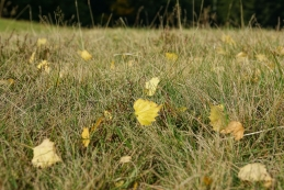 Listi v travi